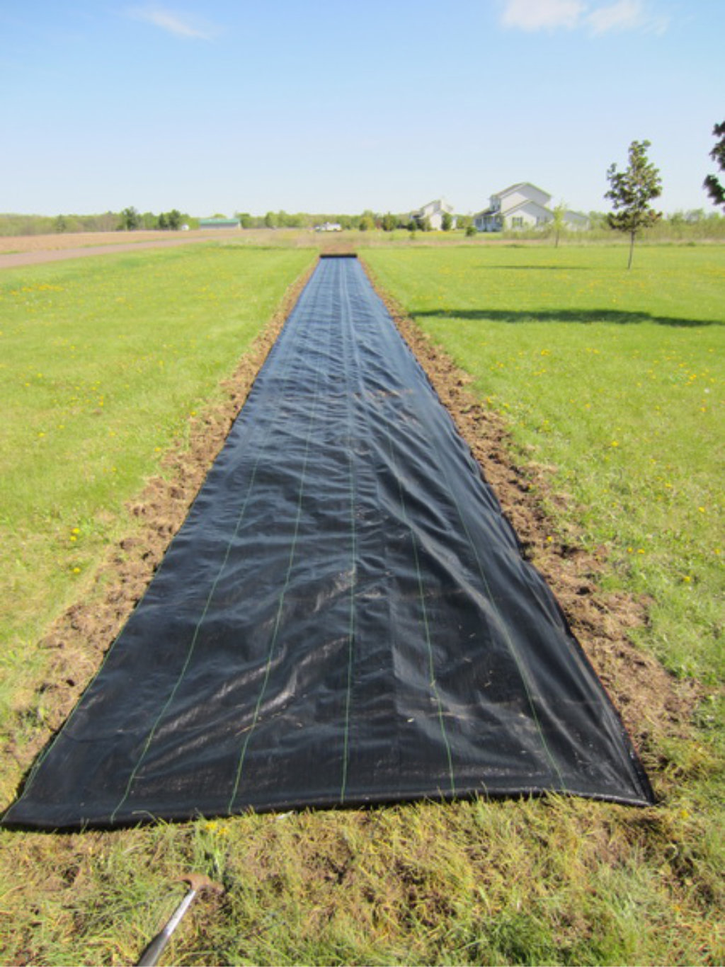 designer fashion 07e89 f7284 Hybrid Cuttings grow a windbreak and screen in one season.