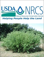 Silky Willow (NRCS) - 12
